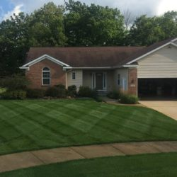 perfect lawn mow